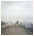Dog Days Bogota 1st Edition
