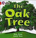 Collins Big Cat - the Oak Tree: Band 02B/red B