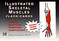 Illustrated Skeletal & Muscle Flash Cards