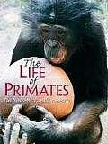 Life of Primates