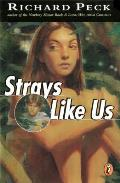 Strays Like Us Cover