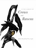 In The Company Of Crows & Ravens