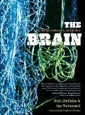 The Brain: Big Bangs, Behaviors, and Beliefs
