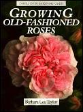 Growing Old-Fashioned Roses