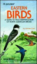 Eastern Birds A Guide To Field Identification