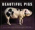 Beautiful Pigs Portraits Of Fine Breeds