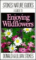 A guide to enjoying wildflowers