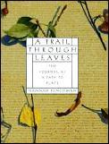 Trail Through Leaves