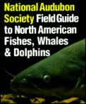 Audubon Society Field Guide To North American Fishes Whales & Dolphins