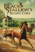 Black Stallion 10 Black Stallions Sulky Colt