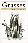 Grasses An Identification Guide