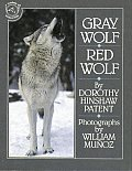 Gray Wolf Red Wolf