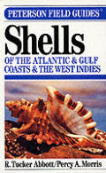 Peterson Field Guide To Shells Of The Atlantic