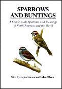 Sparrows & Buntings