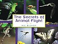Secrets Of Animal Flight