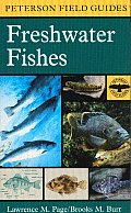 Peterson Field Guides #2: A Field Guide to Freshwater Fishes: North America North of Mexico