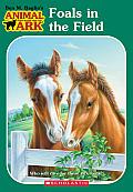 Animal Ark 24 Foals In The Field Series