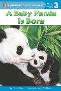Baby Panda Is Born