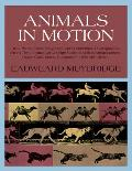 Animals in Motion Cover