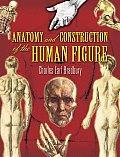 Anatomy & Construction of the Human Figure