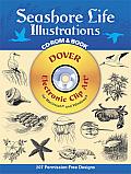 Seashore Life Illustrations