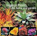 Tropical Plants For Home & Garden