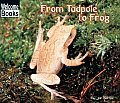 From Tadpole To Frog How Things Grow