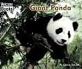 Giant Panda Animals Of The World