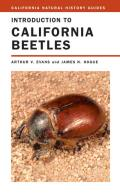 California Natural History Guides #78: Introduction to California Beetles