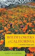 Wildflowers of California a Month By Month Guide