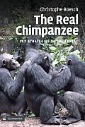 Real Chimpanzee (09 Edition)