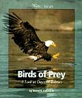 Birds Of Prey A Look At Daytime Raptor