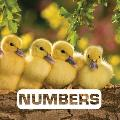 Numbers (Picture This)