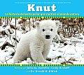 Knut La Historia del Osito Polar Que Cautivo Al Mundo Entero