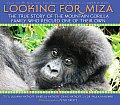 Looking for Miza The True Story of the Mountain Gorilla Family Who Rescued One of Their Own