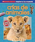 Scholastic Explora Tu Mundo Crias de Animales Spanish Language Edition of Scholastic Discover More Animal Babies