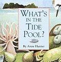 Whats In The Tide Pool