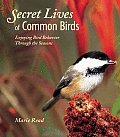 Secret Lives of Common Birds Enjoying Bird Behavior Through the Seasons