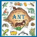 Life & Times Of The Ant