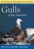 Gulls Of The Americas