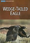 Wedge-Tailed Eagle (Australian Natural History)