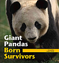 Giant Pandas: Born Survivors
