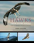 Hawks from Every Angle How to Identify Raptors in Flight