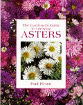 Gardeners Guide To Growing Asters