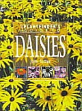 Plantfinders Guide To Daisies Cover