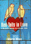 Red Tails In Love A Wildlife Drama In Ce