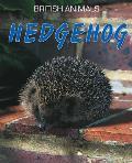 Hedgehog. Michael Leach