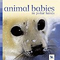 Animal Babies In Polar Lands
