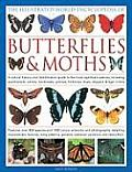 The Illustrated World Encyclopedia of Butterflies & Moths: A Natural History and Identification Guide to the Most Signifigant Species, Including Swall