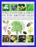 The Illustrated Encyclopedia of Wild Flowers & Trees of the British Isles: An Authoritative Guide to 650 Native and Introduced Species of Flowers, Tre